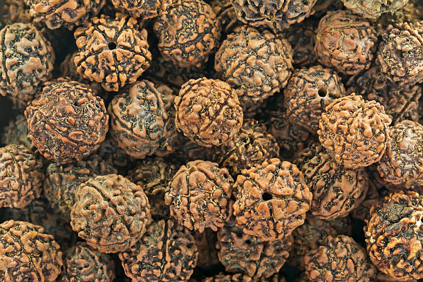 what is rudraksha
